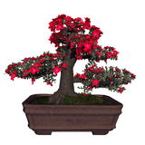 Satsuki azalea tree bonsai - 3D render Royalty Free Stock Images
