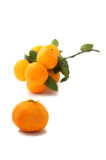 Satsuma Royalty Free Stock Images
