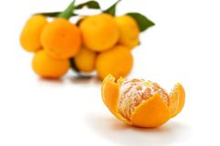 Satsuma Royalty Free Stock Image