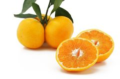 Satsuma Stock Photography