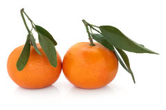 Satsuma Fruit Stock Photography