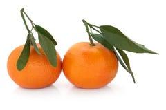 Satsuma Fruit Stock Photography