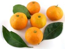 Satsuma-mandarijnen royalty-vrije stock foto's