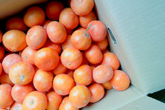 Satsuma orange Royalty Free Stock Photo