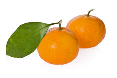 Satsuma Oranges (Citrus unshiu) Royalty Free Stock Photos