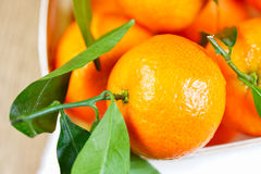 Satsuma on table Royalty Free Stock Image