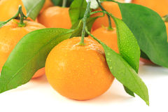 Satsuma Royalty Free Stock Photo
