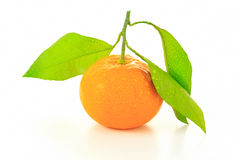 Satsuma Stock Photo