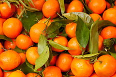 Free Satsumas Stock Photos - 20437063