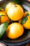 Satsuma tangerine fruit. Yellow fresh satsuma tangerine fruit in natural light stock photo