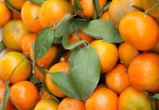 Satsumas Stock Photo
