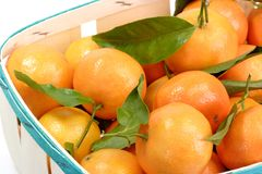 Satsumas with Leaves Royalty Free Stock Images