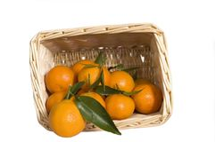 Satsumas in a wicker basket. Fresh satsumas in a wicker basket with the leaves still attached Royalty Free Stock Photo