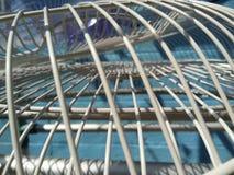 Satta fanskyddsgallrar under solljus för att torka arkivbilder