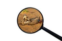Sattel f?r Kamel auf dem Sand lizenzfreies stockfoto