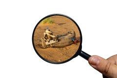 Sattel f?r Kamel auf dem Sand lizenzfreie stockfotos
