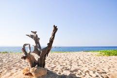 Satun的美丽的无人居住的海岛 免版税库存照片