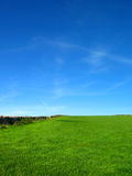 Saturated blue sky and green field royalty free stock images