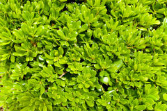 Saturated green leaves background Royalty Free Stock Images