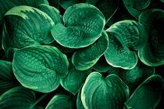 Green plant background. stock photo