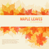 Saturated maple leaves background with space for text. Saturated autumn leaves background with space for text. Vector background with maple leaves in a grunge Stock Photography