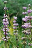 Saturated summer fragrant high flowers royalty free stock images