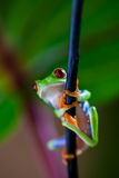 Saturated tropical concept with frog Stock Images