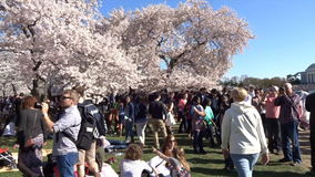 Saturday Crowd at the Tidal Basin stock video footage