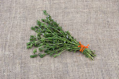Satureja tied savory medical spice herb with orange string on linen Royalty Free Stock Images