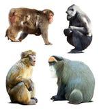 Satz Affen.  über Weiß Stockfotografie