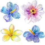 Satz Aquarellblumen. Stockfoto