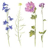 Satz Aquarellblumen und -anlagen Lizenzfreie Stockfotografie