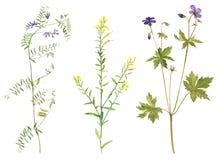 Satz Aquarellblumen und -anlagen Lizenzfreie Stockfotos