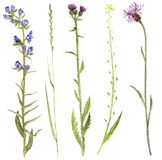 Satz Aquarellblumen und -anlagen Stockbild
