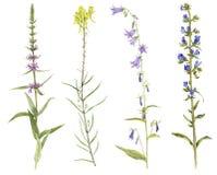Satz Aquarellblumen und -anlagen Stockfotografie