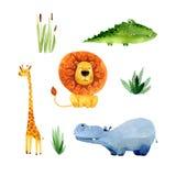 Satz Aquarellkarikatur-Afrikanertiere und pflanzen Stockfotos