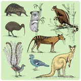 Satz australische Tiere graviert, Hand gezeichnete Vektorillustration Lizenzfreie Stockfotografie