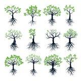 Satz Bäume, grüne Blätter und Wurzeln Stockfotografie