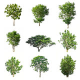 Satz Bäume lokalisiert auf weißem Hintergrund stockfotos