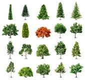 Satz Bäume lokalisiert auf weißem Hintergrund. Vektor stock abbildung