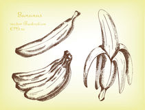 Satz Bananen tragen Früchte, übergeben gezogene Illustration Lizenzfreie Stockfotos