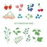 Satz Beeren, Kräuter und Anlagen Einfache Farben Stockfoto