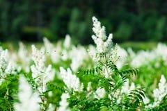 Satz Bienen, die vorangehen, um Hintergrund zu pflanzen Stockfotografie
