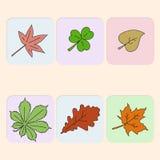 Satz Blätter Stockfotografie