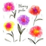 Satz blühende Blumen Stockfoto