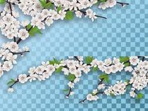Satz blühende Fruchtbaumaste des Frühlinges Lizenzfreie Stockfotografie