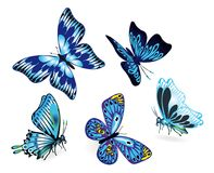 Satz blaue Schmetterlinge Lizenzfreies Stockbild