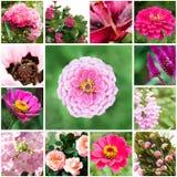 Satz Blumen Stockbilder