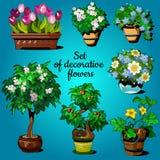 Satz dekorative Zimmerpflanzen stock abbildung