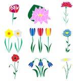 Satz der allgemeinsten Blumen Stock Abbildung